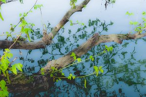 Tree branch in river