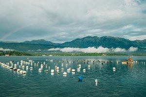 mussel farm in Kotor Bay
