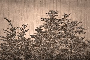 Textured Nature Background
