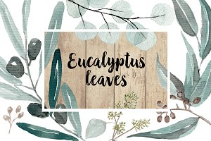 Eucalyptus Watercolor Set