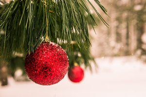 Christmas Decoration in Snowy Forest