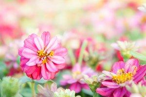 flora blossom flowers
