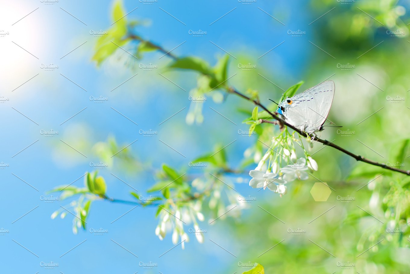 Blooming Spring Flowers And Butterfly Nature Photos Creative Market