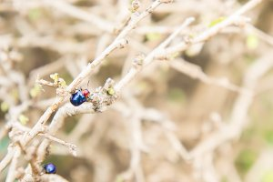 insect ladybugs in dry branches