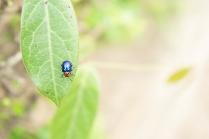 insect ladybug on Leaves