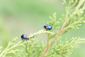 insect ladybugs in nature garden