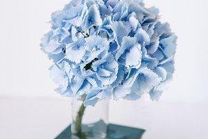 Blue hydrangea and books