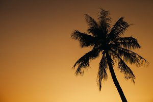 sunset sky with palm silhoutte