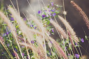 Wild grass with purple flowers