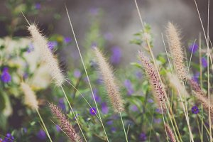 Wild grass with purple flowers