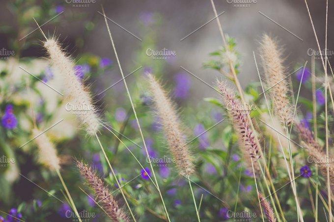 Wild Gr With Purple Flowers