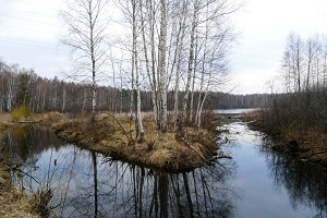 Spring by the lake in the forest in Russia