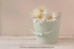 01 Daisies In Bucket Text Template