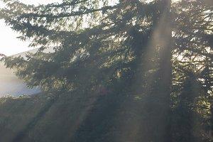 Abstract glowing sunbeams through tree