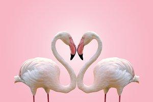 Love concept of couple flamingos