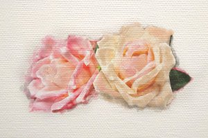 Rose watercolor on canvas