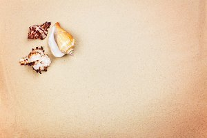 Beach sand and sea shells
