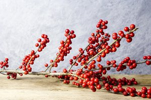 Winterberry holly on old wood