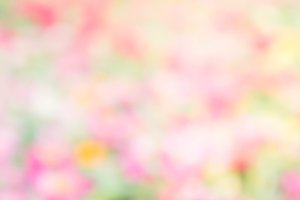 abstract blur nature blossom color