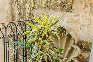 Vintage Plant in the Wall