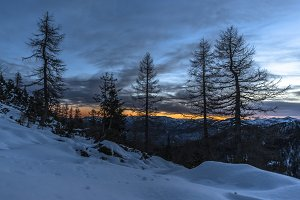 Dark Forest at Sunset in Mountains