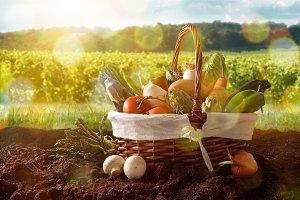 Vegetables in basket on soil front