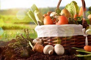 Vegetables in basket on soil lateral