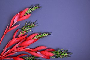 red Billbergia flower