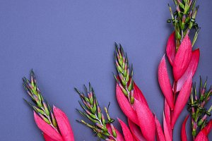 bouquet of pink Billbergia flower
