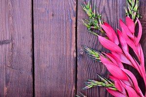 Pink flower of Billbergia