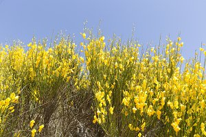 Hiniesta in spring