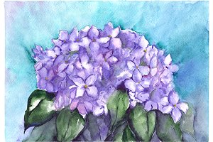 Watercolor lilac hydrangea flowers