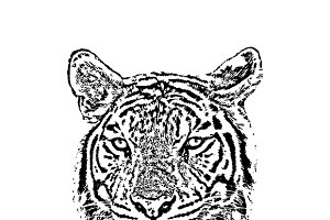 Vector of a tiger face.