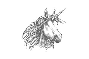 Unicorn horse animal vector sketch