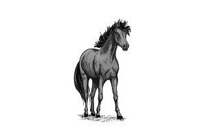 Horse equine vector sketch symbol