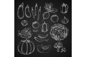 Vegetables isolated icons vector sketch