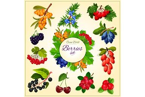Vector wild berries and fruits set poster