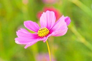 The purple yellow flower