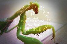 Animal Kingdom - Mantis Special