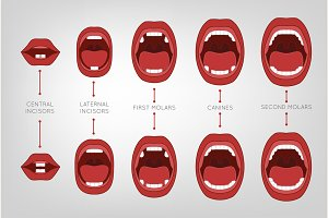 Baby First Teeth Chart