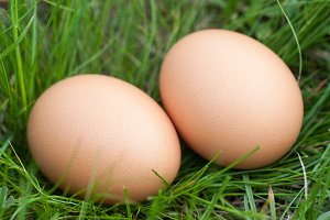 two chicken eggs lying in a nest of green grass