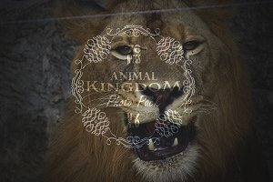 Animal Kingdom Photo Pack V.6