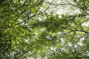 Green leaves on tree in garden