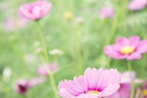 blossom vintage flowers garden