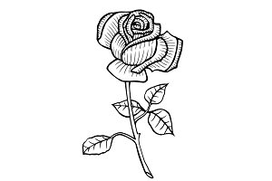 Rose Vector Hand drawn