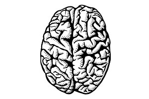 Human brain illustration