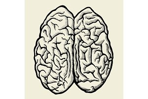 Vector hand drawn Human brain