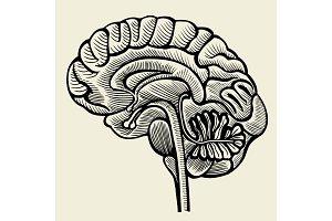 Human brain - vintage engraved illustration