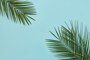 Palm leaves isolated