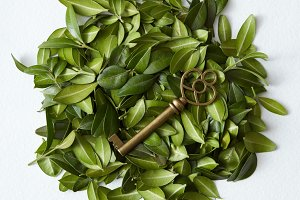 Leaves with vintage key